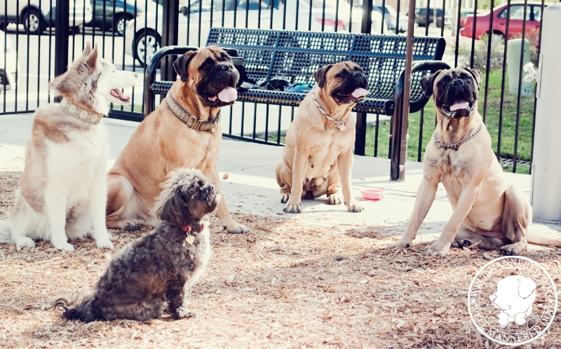 dogs-at-dog-park