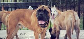 dogs-dog-park