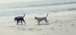 dogs-playing-beach