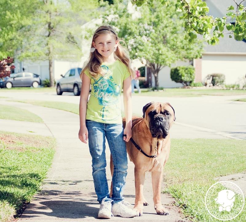 bullmastiff-and-girl