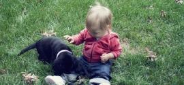 labrador-puppy-and-girl