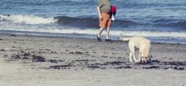 labrador-charleston-beach