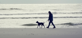 labrador-mix-walks-on-folly-beach