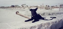 mixed-breed-down-stay-folly-beach