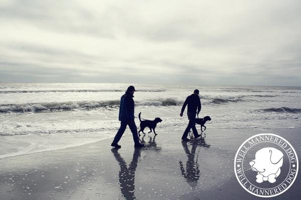 dogs-walking-beach