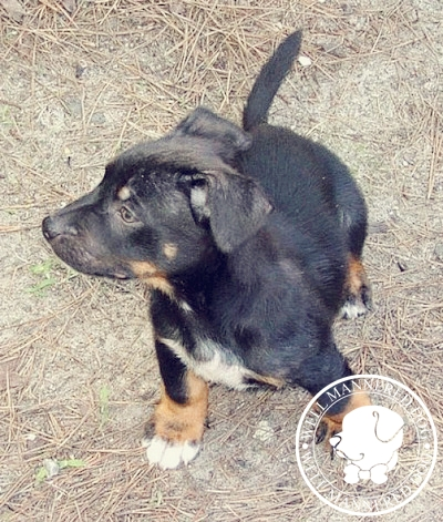 mixed-breed-puppy