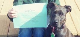 pit-bull-diploma