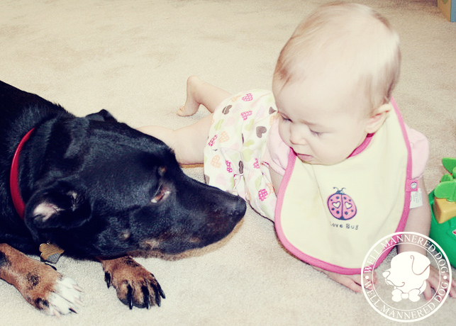 We can train your dog to understand a new baby being in the house.