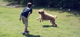 labradoodle-and-boy