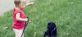 labrador-puppy-and-baby