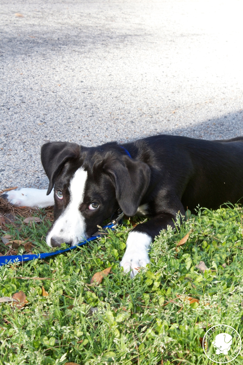mixed-breed-puppy-pavement
