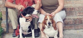 mixed-breed-basset