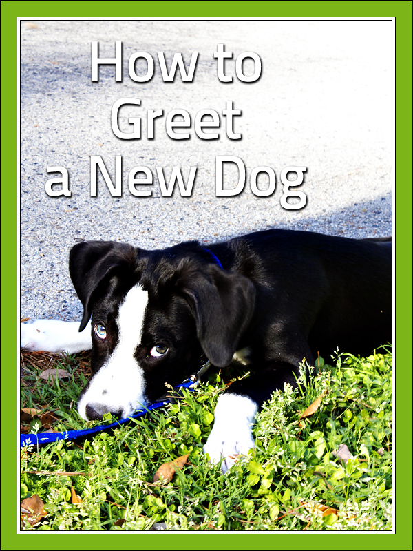 How to Greet a New Dog